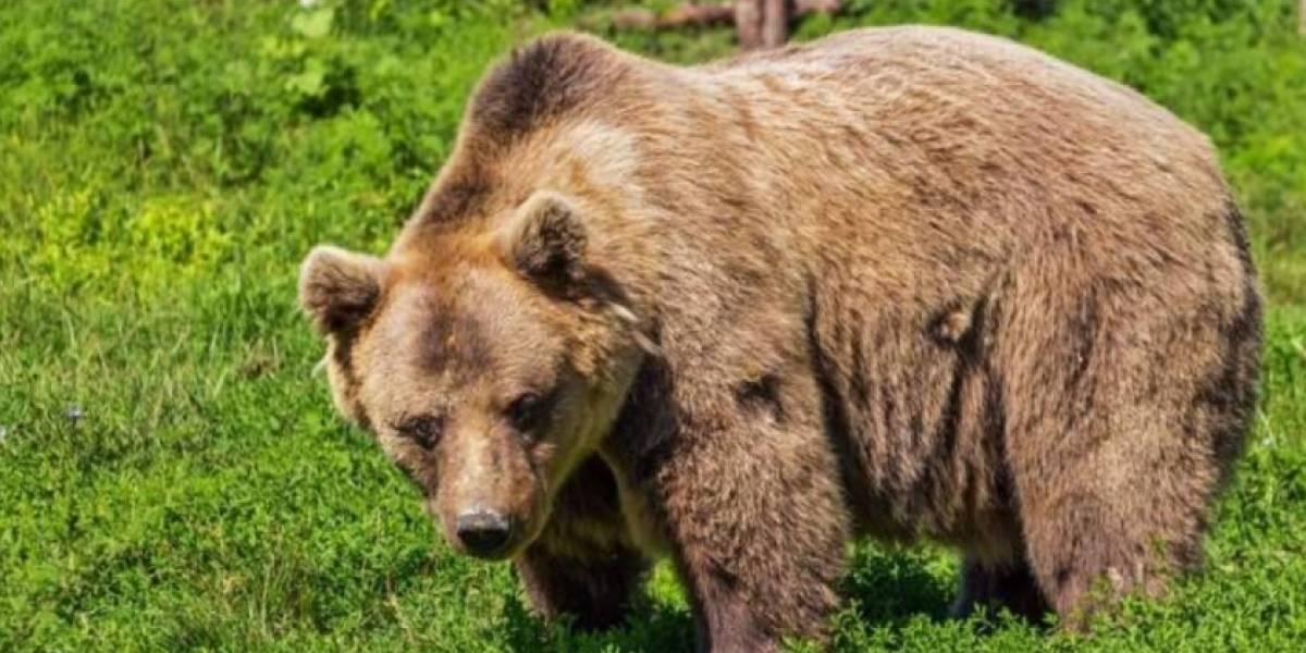 Gobernador ruso recibió un rifle como regalo de cumpleaños y decide estrenar su arma de una horrible forma: mató a un oso que estaba hibernando