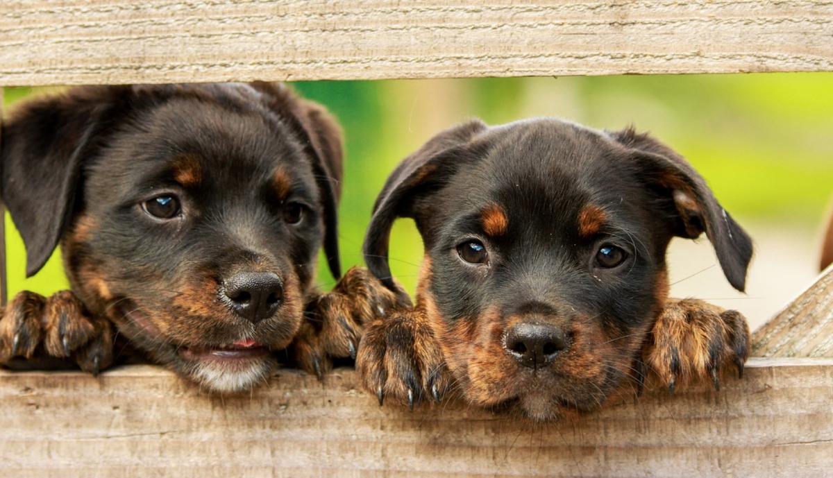Tener una mascota te ayudará a tener mejor estado de ánimo Especial
