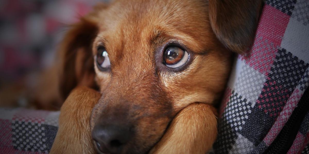 Conmemora a tus amigos de 'cuatro patas' este Día de Muertos para Mascotas