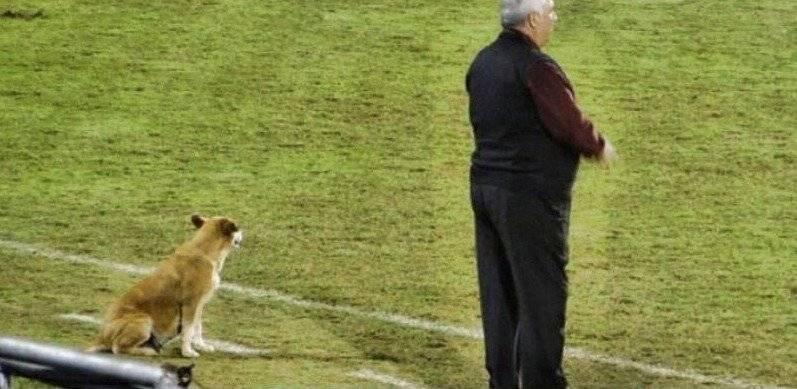 No se le despega al técnico Jara Saguier. / Twitter: @club2demayo