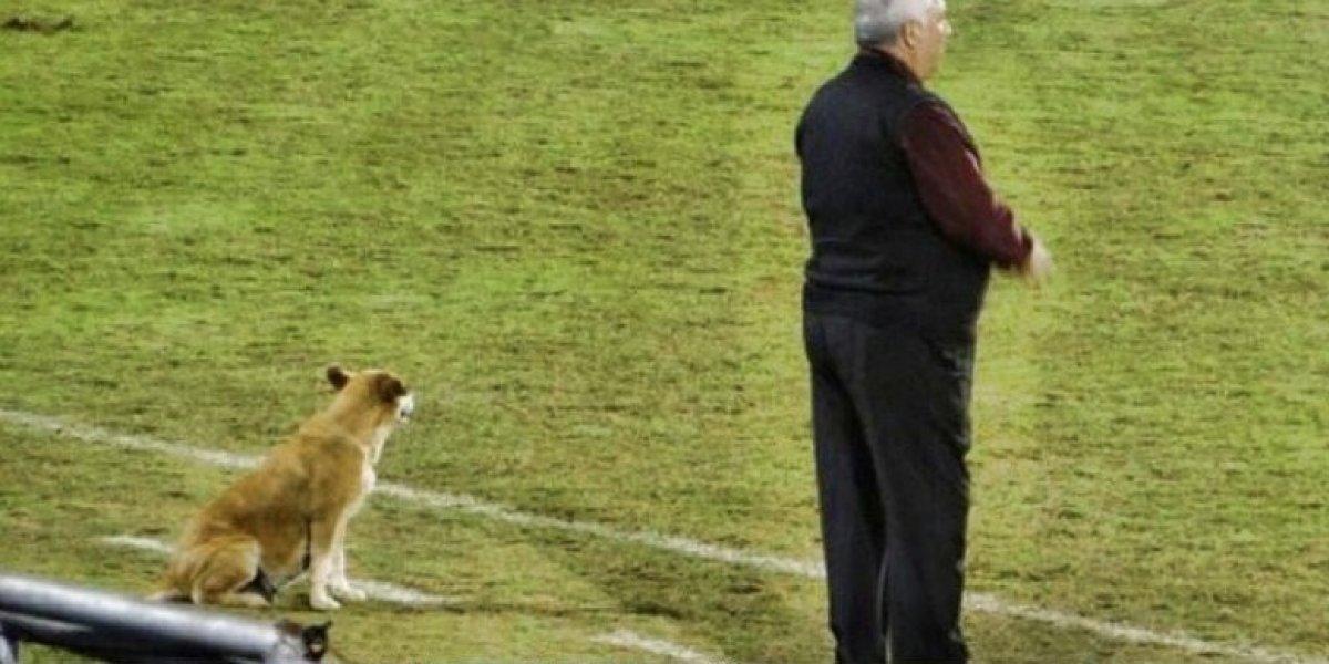 Conoce a Tesapará, la perrita inseparable del club 2 de mayo de Paraguay