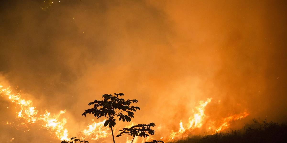 Cada semana se presentan 11 incendios forestales en Cali