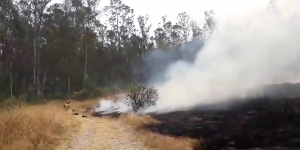 Quito: Incendios en el Parque Metropolitano y otros tres sectores