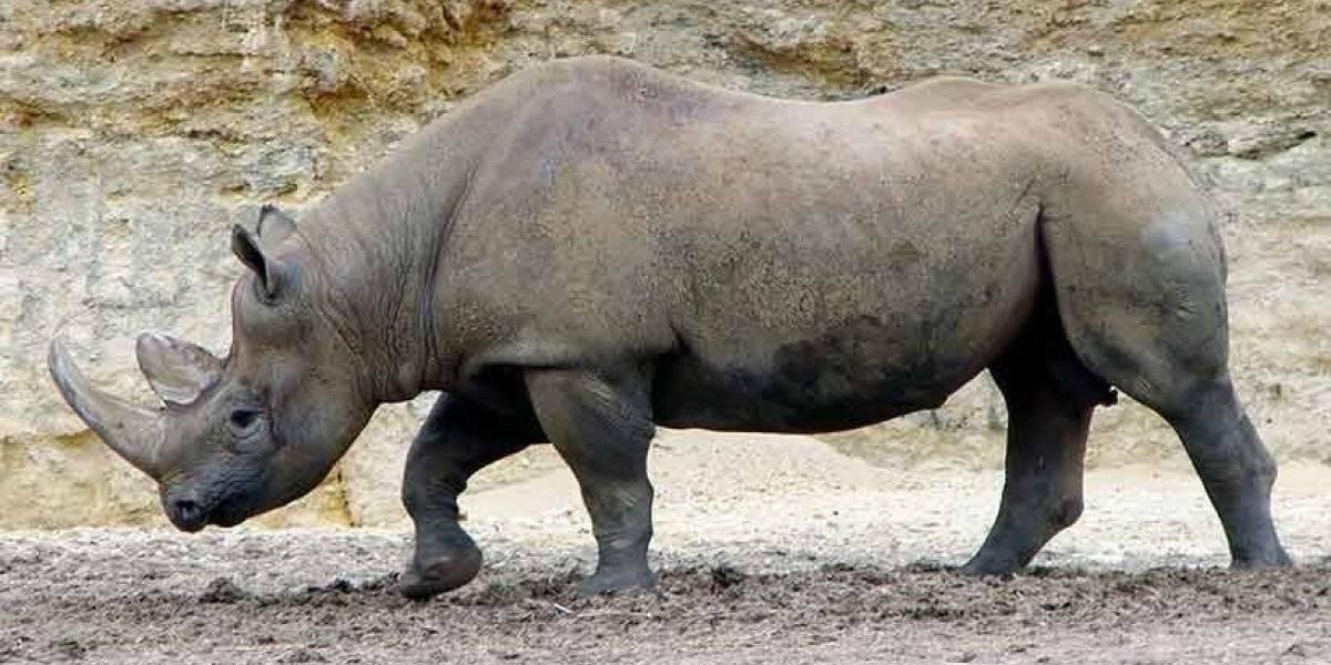 7 animales que ya se extinguieron