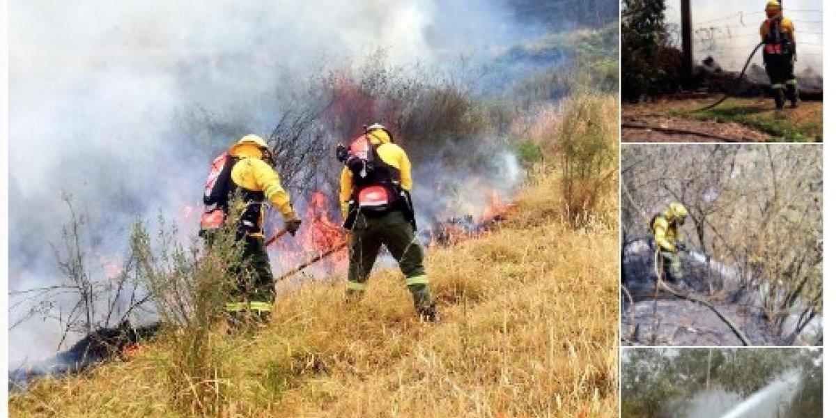 Ola de incendios se registran en Quito