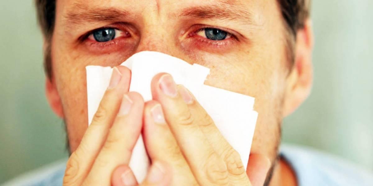 Adiós alergias: Aplicación te dice el nivel exacto de polen que hay en un lugar