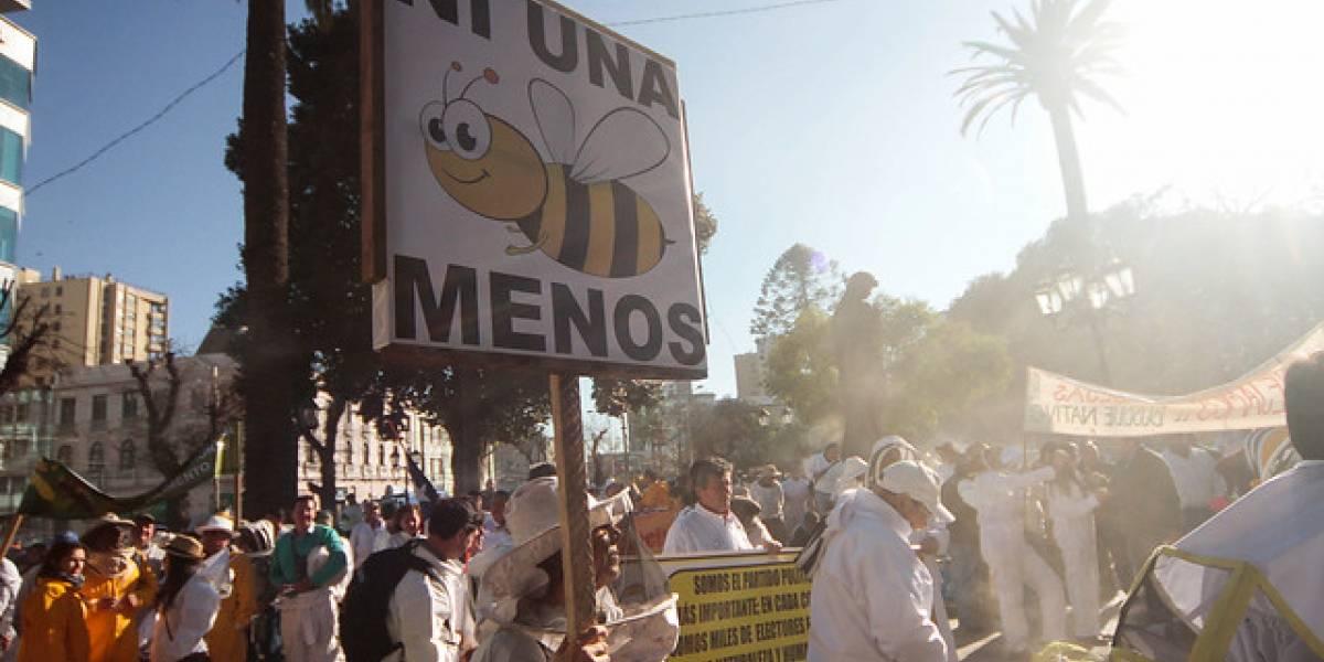 Gobierno en pie de guerra contra las avispas: organizaciones cuestionan el método