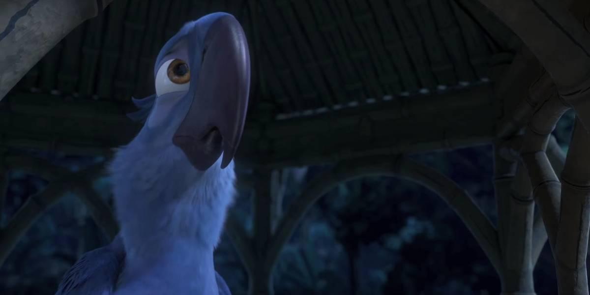 """""""Blu"""" está """"en peligro crítico"""": ya no quedarían guacamayos azules en su estado silvestre"""