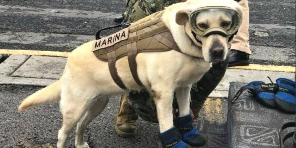 México: La Marina evitó que registraran a la perra Frida ante el IMPI para comerciar con ella