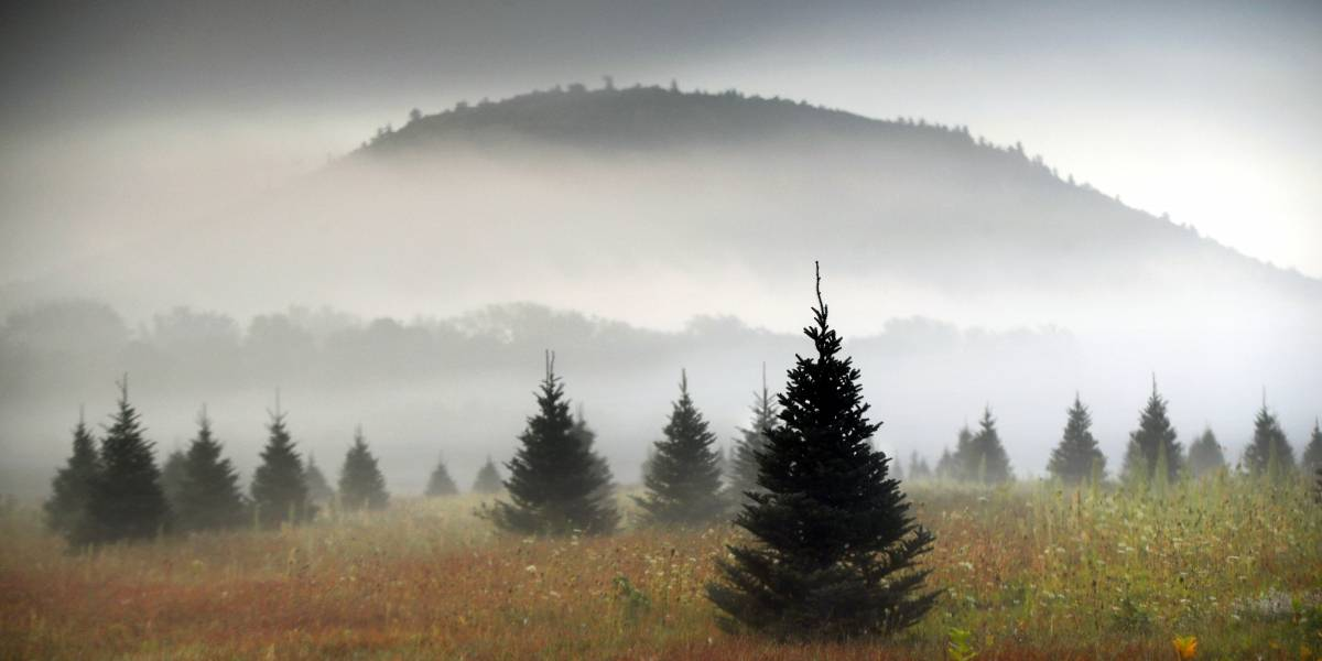 Amazon venderá árboles de Navidad