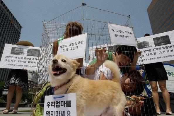 Nueva York fue el primer estado en EU en prohibir las electrocuciones de animales para su matanza Foto: Getty Images