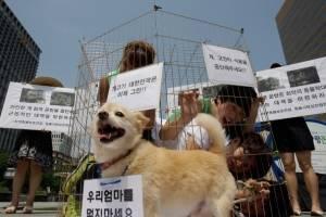 Datos sobre el maltrato animal en el mundo