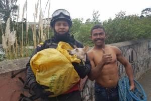 Rescate perro en Machángara
