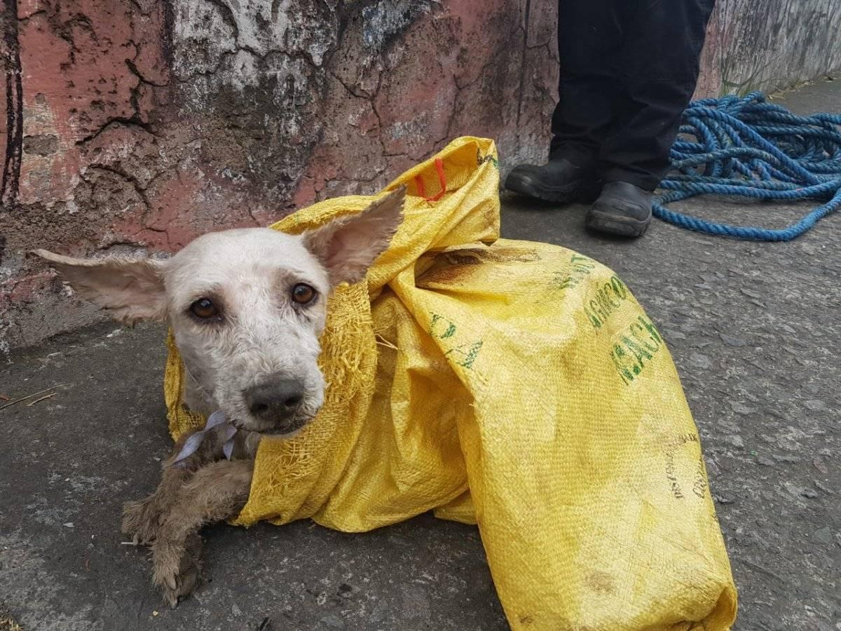 Quito tiene un perro abandonado por cada 22 personas Twitter