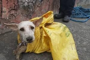 Quito tiene un perro abandonado por cada 22 personas