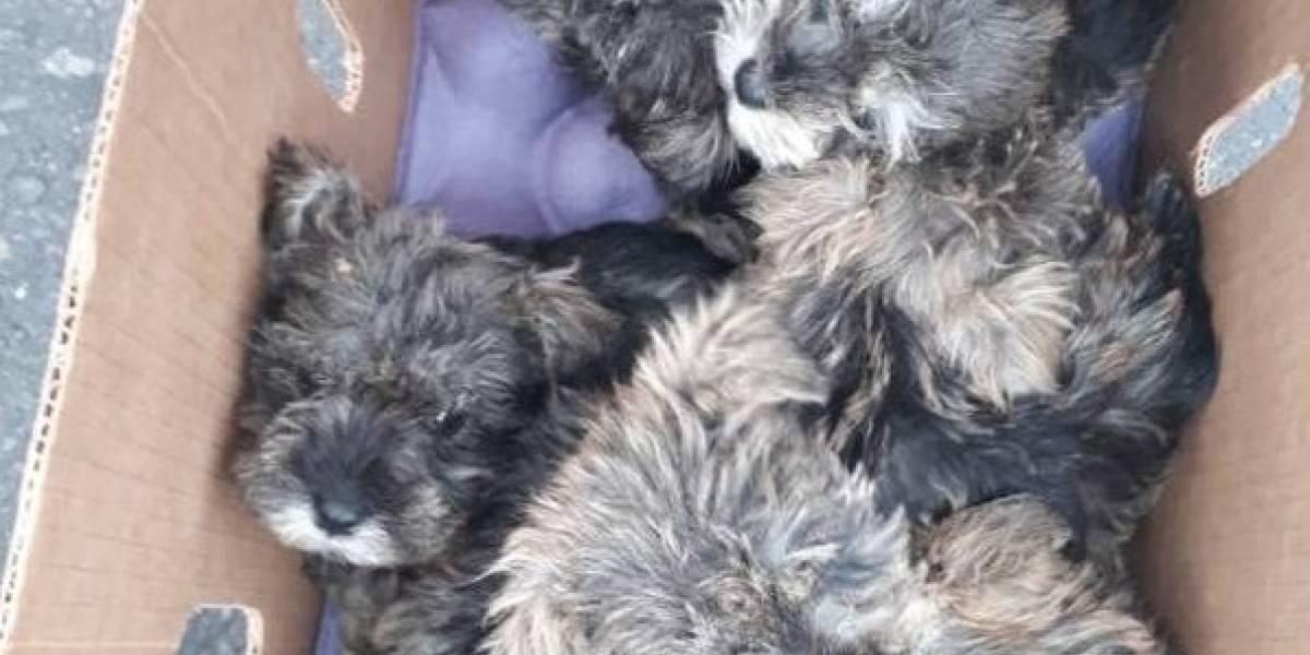Quito: Rescatan 64 mascotas en mercado de Chillogallo