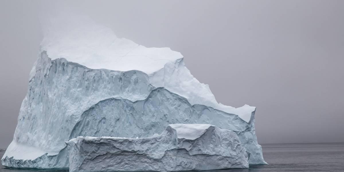 """""""Antartina"""" la planta de la Antártica que promete combatir el cáncer colorrectal"""