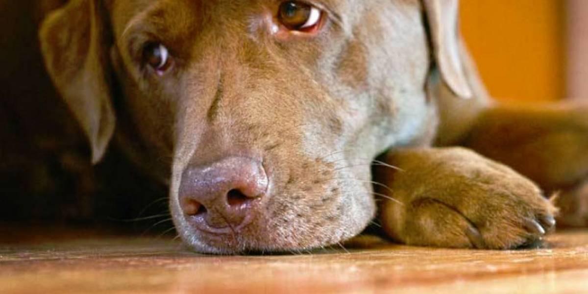 El reencuentro de perro con su amo, luego de tres años, conmocionó las redes sociales