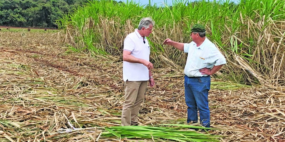 Websérie fala sobre a colheita e a degustação da cachaça