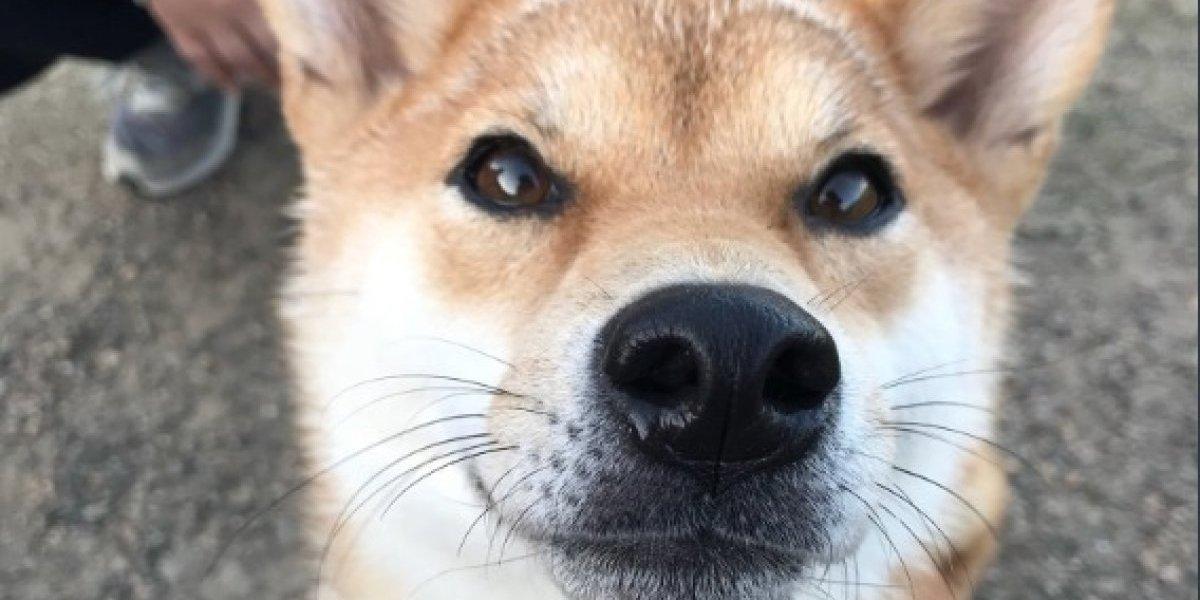 """""""Comer"""" y """"hamburguesa"""": las primeras palabras del perro que aprendió a """"hablar"""" y que se robó los corazones de las redes sociales"""
