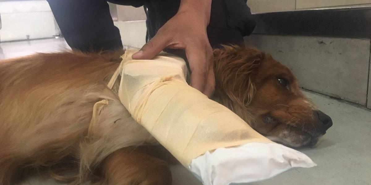 Bomberos salvan a perro que fue arrollado por un vehículo