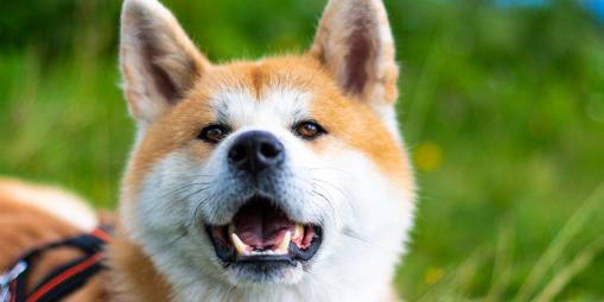 ¿Cómo desparasitar a un perro?