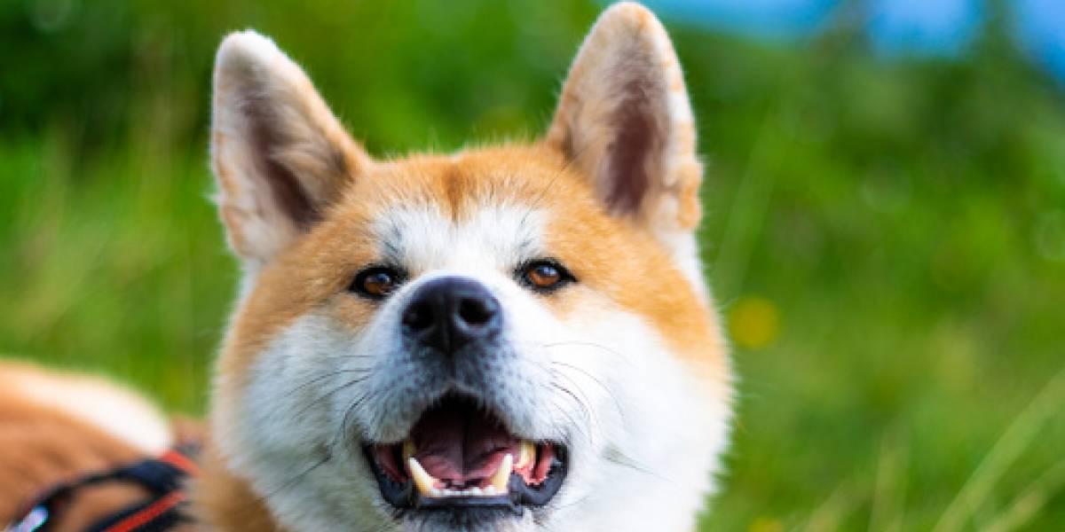 VIDEO: Las primeras palabras de un perro que aprendió a 'hablar'