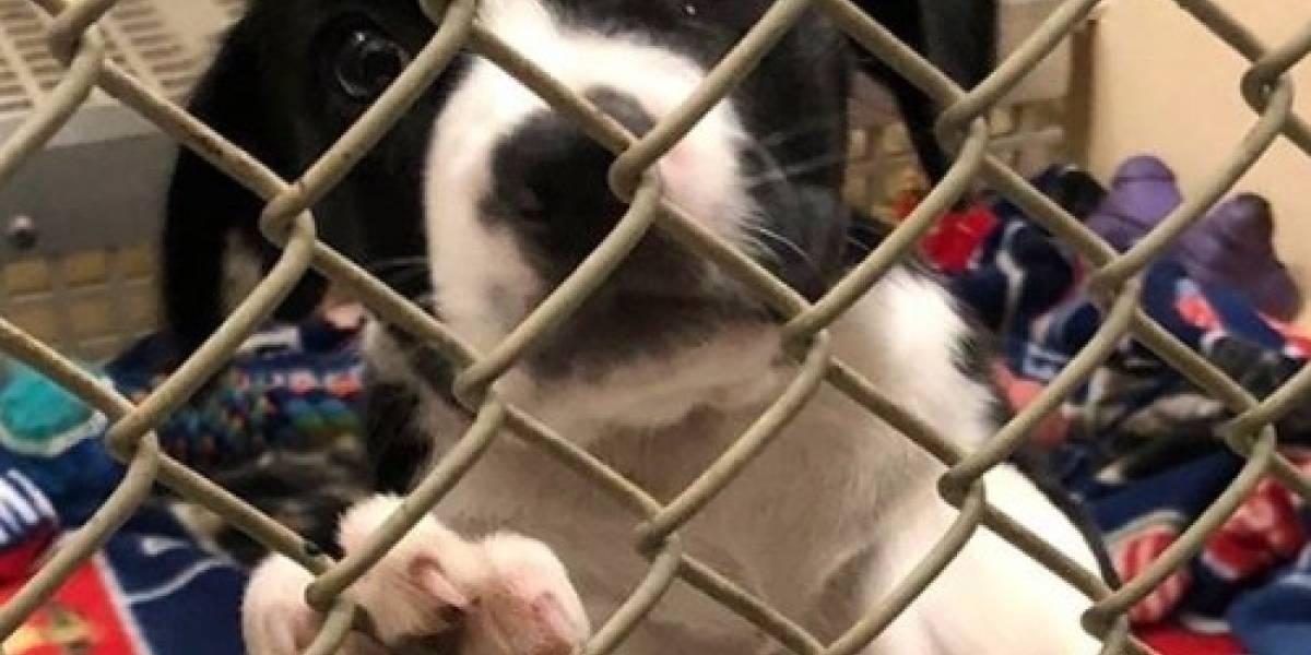 La difícil medida de los refugios de mascotas por el huracán Florence: matar animales que no fueran adoptados