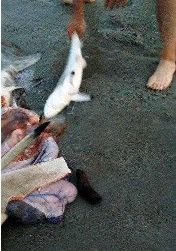 Vio un tiburón agonizante y le realizó una cesárea de emergencia Beth Cordell