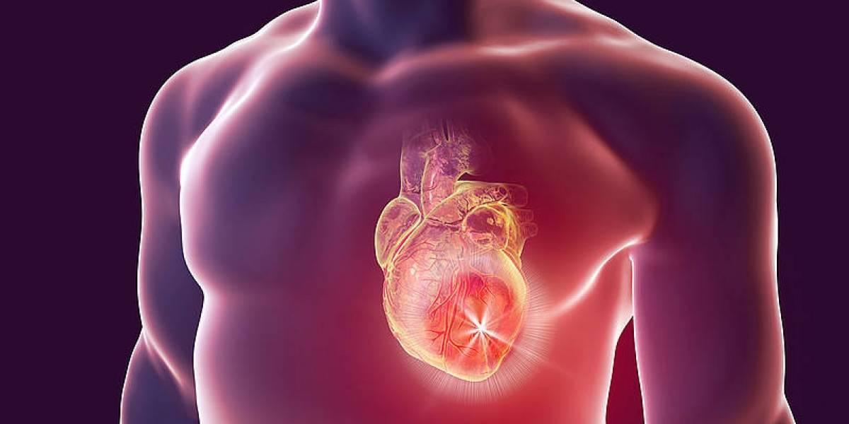 Científicos podrían usar células madre para tratar efectivamente la recuperación de un ataque cardíaco