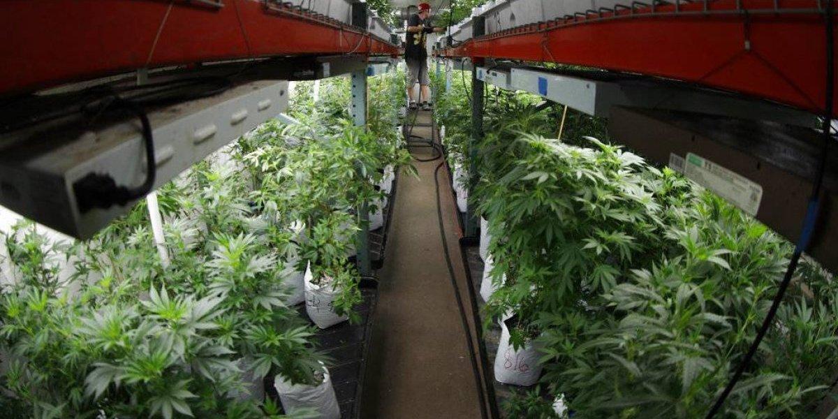Duro golpe económico al cannabis medicinal