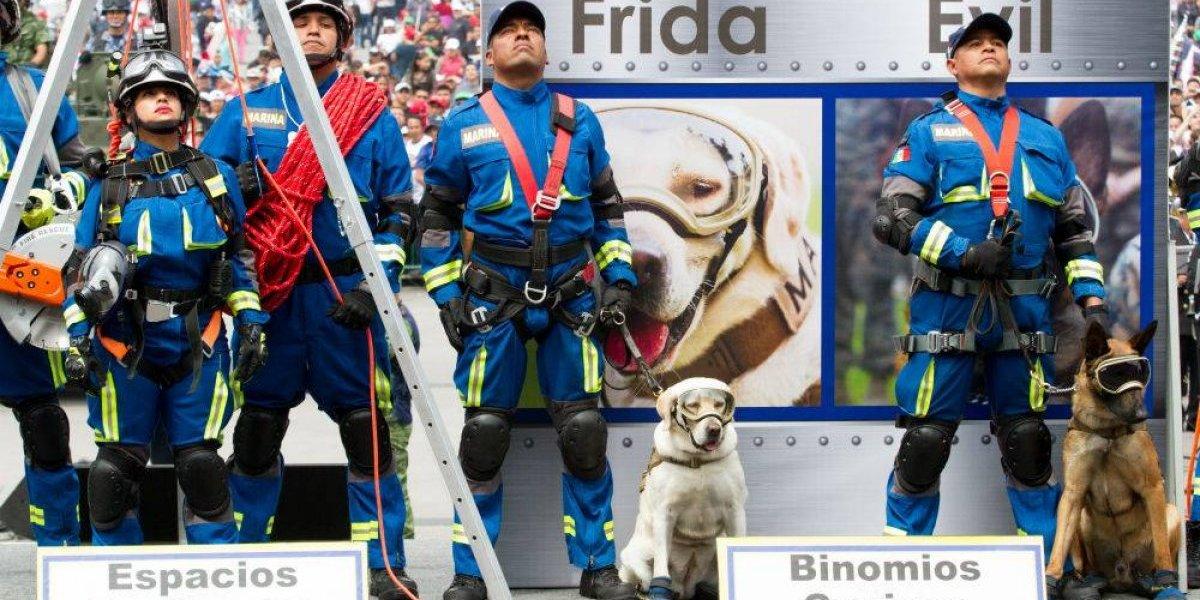 Frida y Evil, las estrellas caninas del Desfile Militar