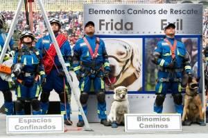 Desfile Frida