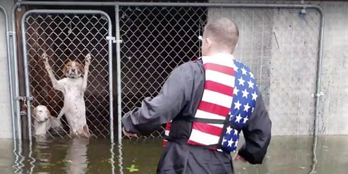 Un verdadero héroe: rescató a seis perritos que estaban al borde de morir ahogados tras ser encerrados en jaula en pleno huracán Florence