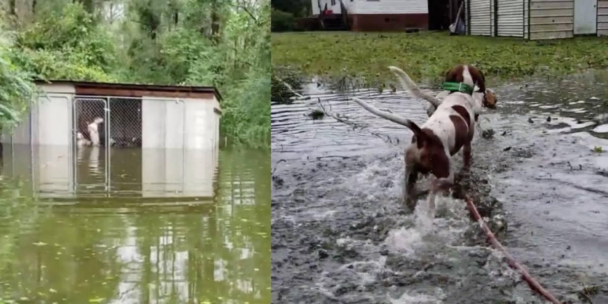 Rescató a seis perritos que estaban al borde de morir ahogados tras ser encerrados en jaula en pleno huracán Florence