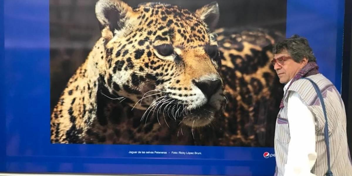 Fotografías de Guatemala captadas por Ricky López dan la bienvenida en Aeropuerto La Aurora