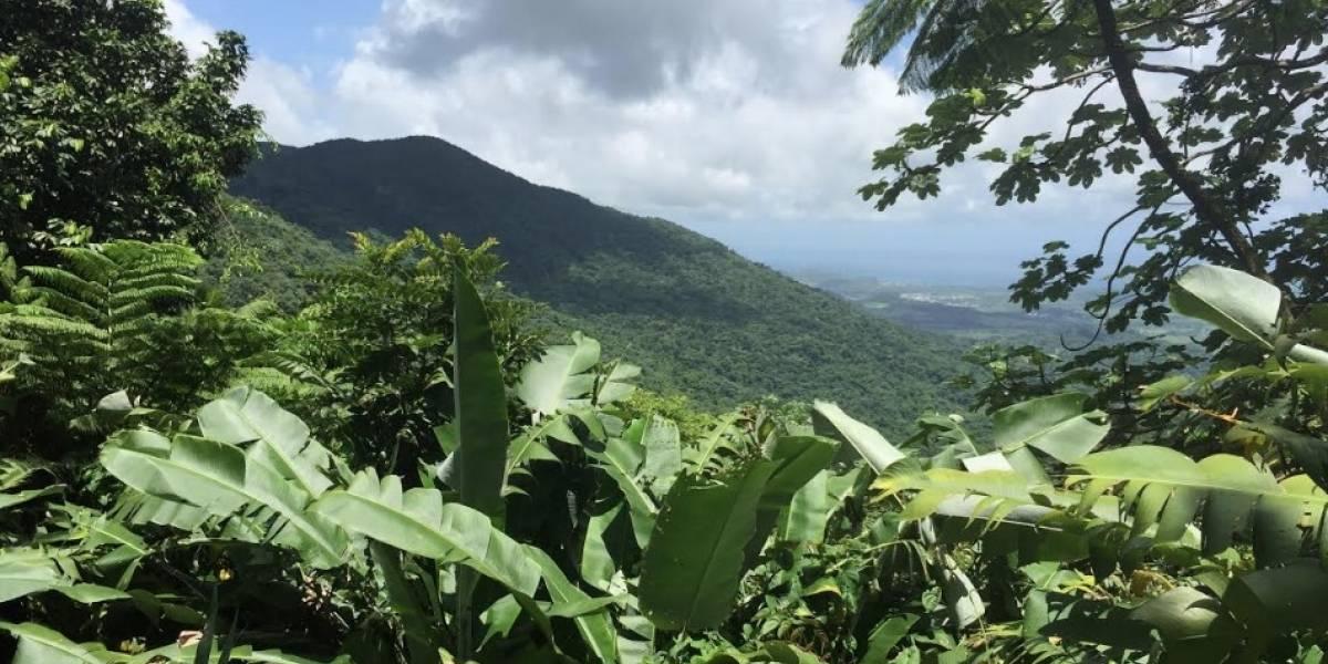 El Yunque reabrirá sus principales áreas recreativas