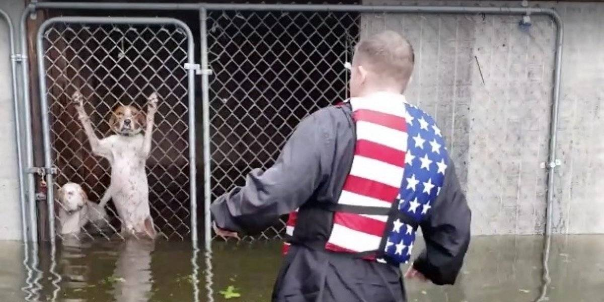 Hombre rescató a seis perros que estaban al borde de morir ahogados por el huracán Florence