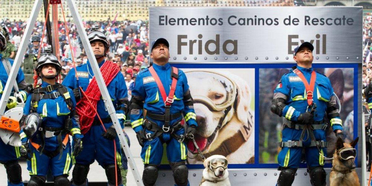 Frida, rescatista que pasó de la Marina al estrellato