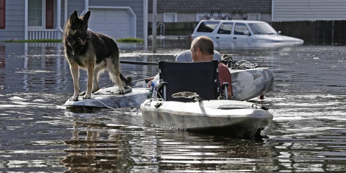 EN IMÁGENES. Animales sufren durante huracán Florence
