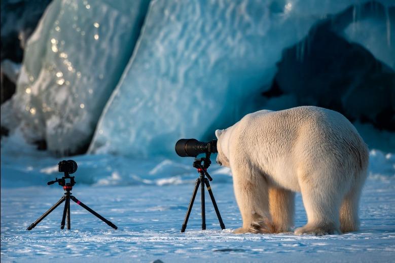 """Fotografoso de vida salvaje"" - Roie Galitz"
