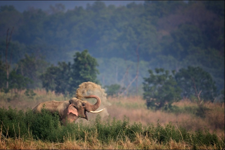 """Elefante sonriente"" - Anup Deodhar"