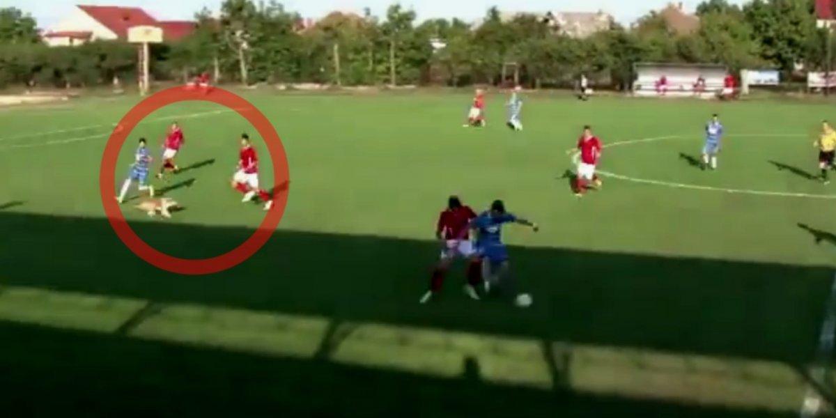 VIDEO: Perro lesiona a futbolista en pleno partido