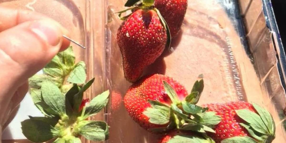 El misterio de las agujas que aparecen en fresas en toda Australia