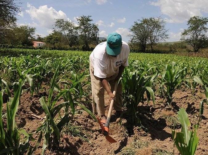La agricultura registró una caída 2.1% durante el segundo trimestre de 2018, informó el Inegi / Cuartoscuro