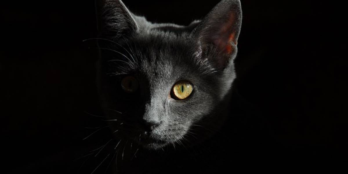 """Revelan la verdadera identidad del """"asesino en serie"""" de gatos en Londres"""