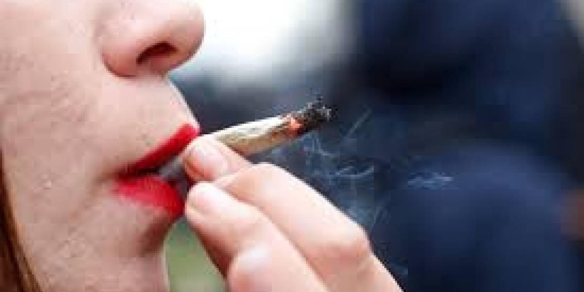 Buscan catadores de mariguana; reciben cientos de solicitudes