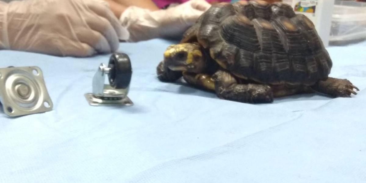 Médicos descubren que mujer tenía una tortuga en sus genitales