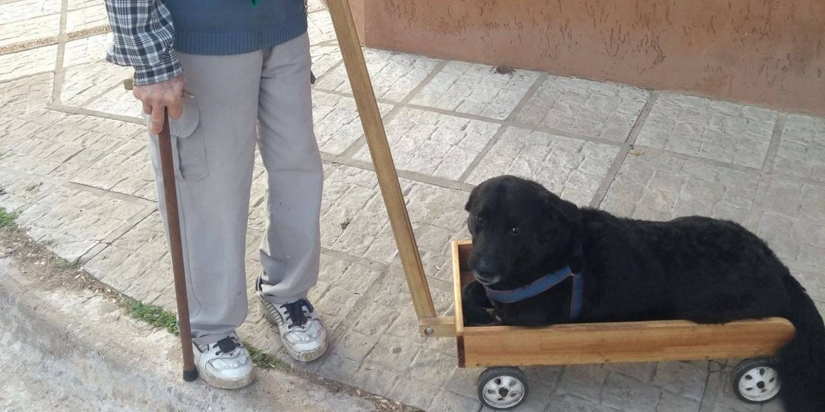 Máximo gesto de amor: su perro ya no podía caminar por la edad y abuelito le construyó un carro a medida
