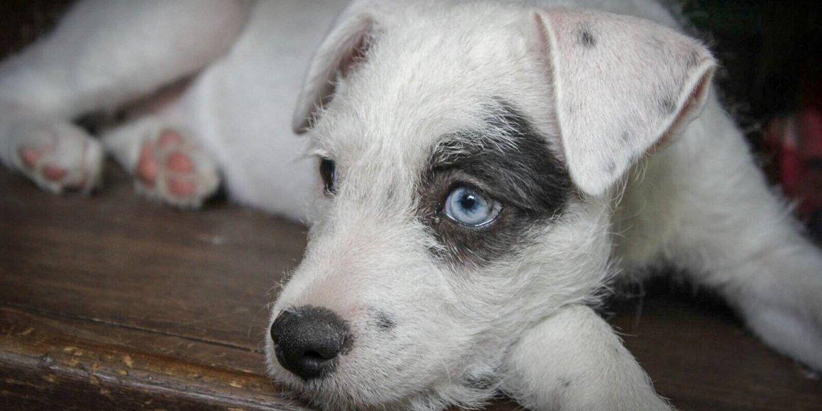 ''Regresen al perrito, es todo lo que tenemos'', abuelitos ofrecen rescate